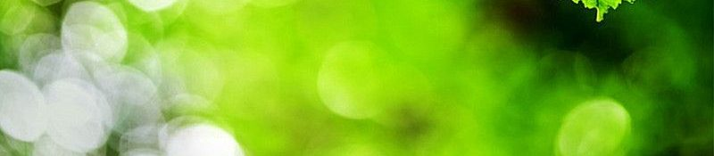 green wpls wood tw baner